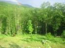 konj_priroda